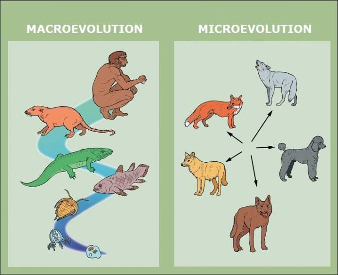 Darwin and His Theory of Evolution and conflicts